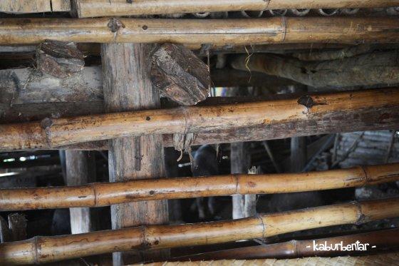 Kandang ternak di bagian bawah rumah