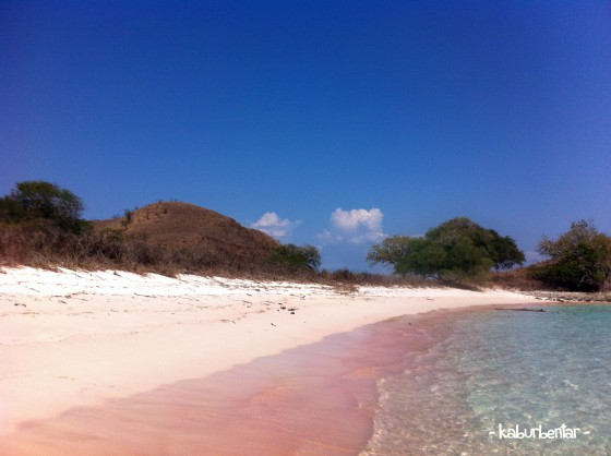 The legendary Pink Beach Komodo!