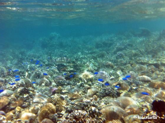 Bisa dekat-dekat dengan ikan pas snorkeling di Pulau Kelor!