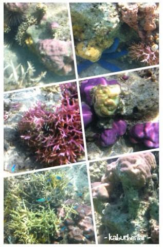 Underwater view Pulau Tiga