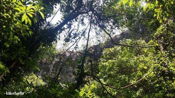 Mengintip bibir gua Jomblang dari bawah. Terlihat kan rimbunnya vegetasi di area bawah?