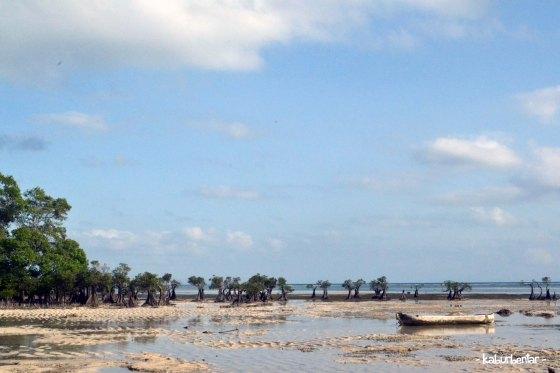 Area mangrove di Walakiri