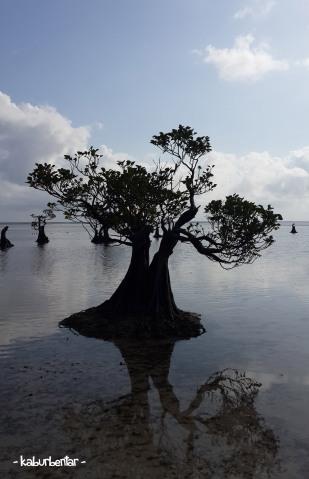 siluet mangrove 1