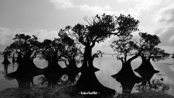 siluet mangrove 3